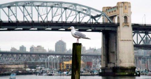 Climate activists shut down Vancouver bridge, link climate change to B.C. fires - BC | Globalnews.ca