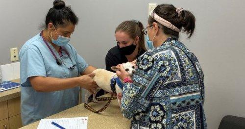 Calgary seniors bring pets to free vet clinic: 'the demand is so high' - Calgary | Globalnews.ca