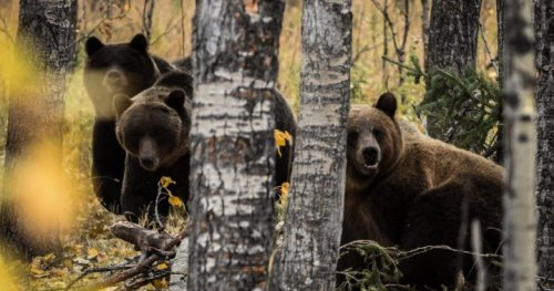 Crowsnest Pass program reminds Albertans to be respectful of bears