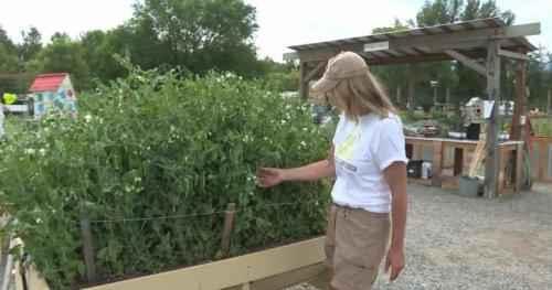 Kelowna garden project grows food for children in need