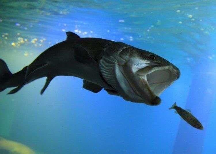 Hokkaido Aquarium: Visiting Northern Daichi Aquarium, the World's First 'Freezing Aquarium'!