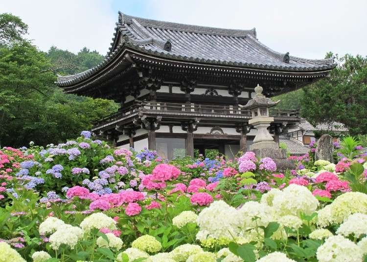 10 Best Spots for Hydrangeas in Kansai: From Famous Sites to Charming Hideaways