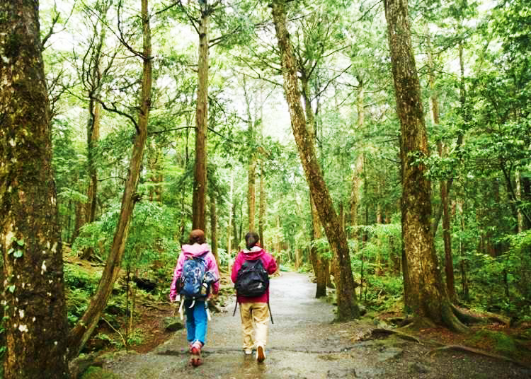 Exploring Mysterious Aokigahara Forest and its Caves