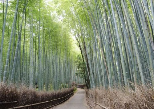 Self-Guided Kyoto Bike Tour: Must-See Places in Arashiyama!