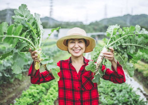 10 Popular Japanese Vegetables And The Unique Ways They're Used!