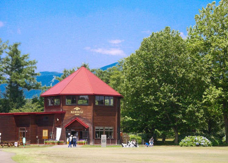 Koiwai Farm Guide: Eat, Learn and Play at Iwate Prefecture's Premier Agritourism Destination!