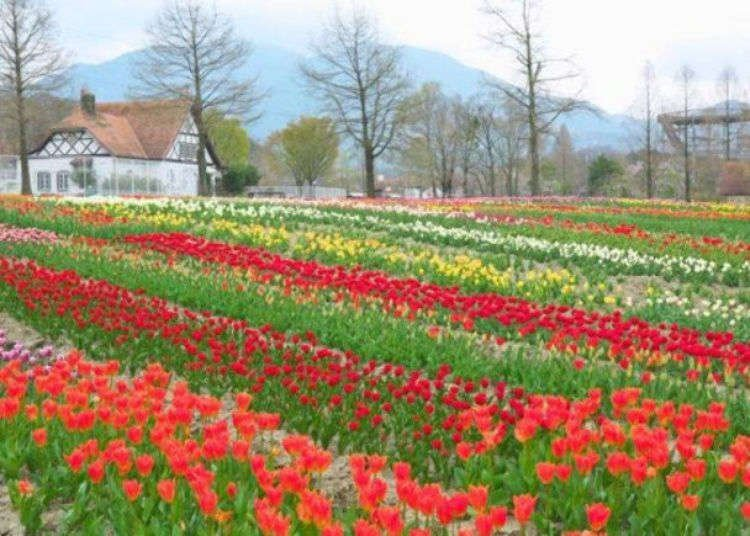 Shiga Blumen Hugel Farm: Gorgeous Flowers in Japan, Food and More at Shiga Agricultural Park!