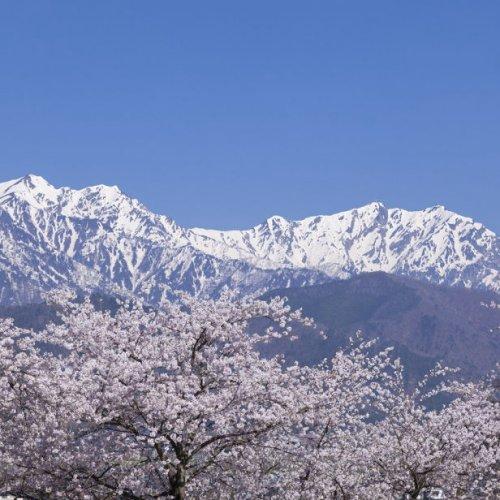 Forests & Mountains Kansai - LIVE JAPAN