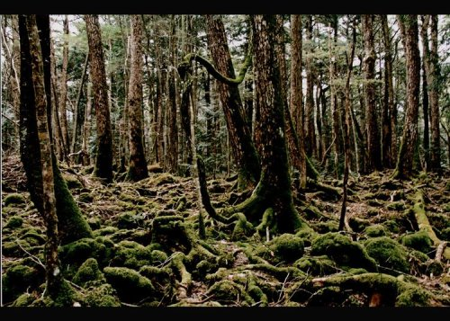 Japan Trip: Most Popular Forests & Mountains in Tokyo and Surroundings