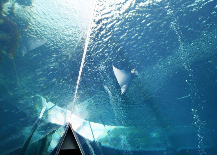 Visiting Aquamarine Fukushima: Tohoku's Largest, Must-See Aquarium!
