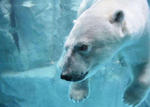 Oga Aquarium GAO Guide: Fish, Polar Bears and...Godzilla? | LIVE JAPAN travel guide