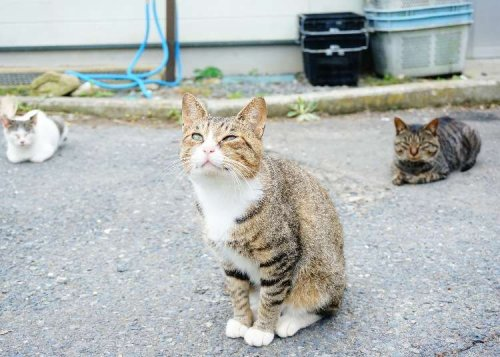 Tashirojima Island: Visiting Cuddly Cat Island in Japan Watched Over by the Cat God | LIVE JAPAN travel guide