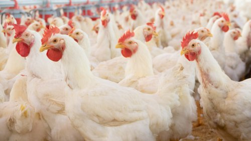 The Supply Chain is Broken Again for Chicken, Ketchup and Computer Chips
