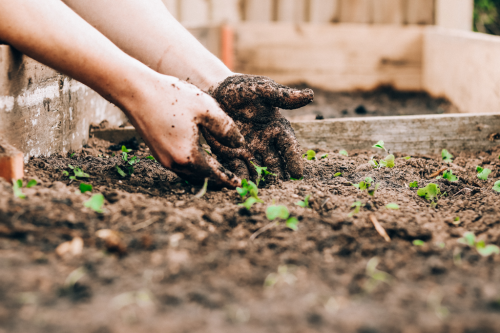 A Guide On How To Use Coffee Grounds For Gardening