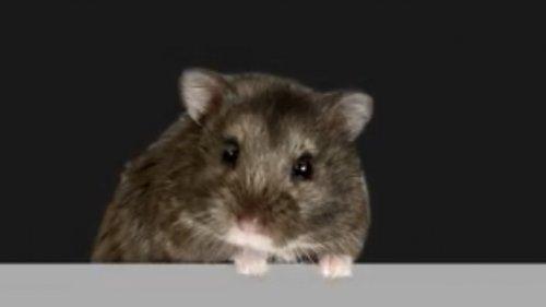 Hamster handelt mit Kryptowährungen und schlägt Aktienindex
