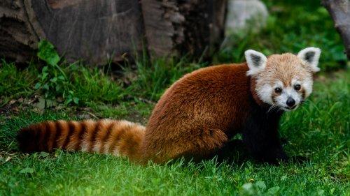 Mozilla testet Bing als Suche im Firefox-Browser