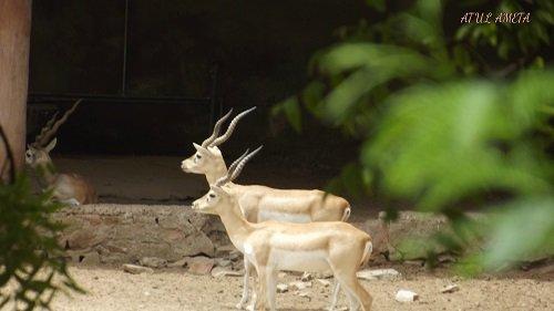 Wildlife Sanctuaries in India – Best Wildlife Parks to Explore