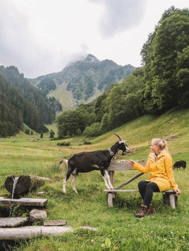 Sehenswürdigkeiten Österreich: meine 7 Lieblingsorte & besten Tipps für das malerische Alpenland