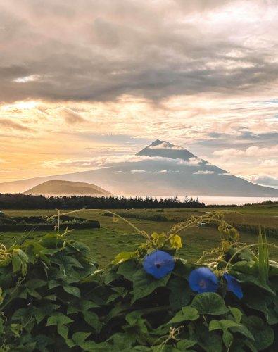 Pico: Sehenswürdigkeiten & Highlights der grauen Vulkaninsel auf den Azoren