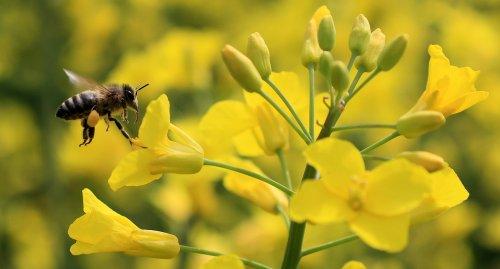 Podcast: Gute Nachrichten zum Thema Bienen, neue Windräder in Blumenform, Mehrheit will auf Inlandsflüge verzichten