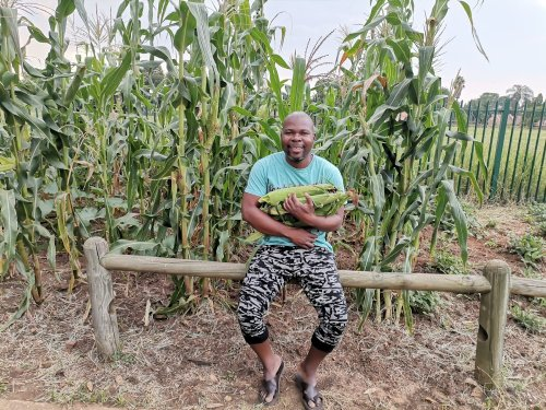 I will chop it up if they charge me: Tshwane man on pavement cabbages