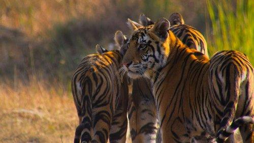 Les 5 meilleurs documentaires sur la nature à voir absolument sur Netflix