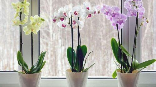 Orchidées : 9 astuces pour refaire fleurir cette plante après l'été