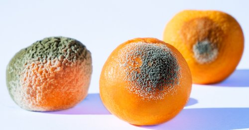 Ever Wondered What Happens If You Eat Mold? Now You Know