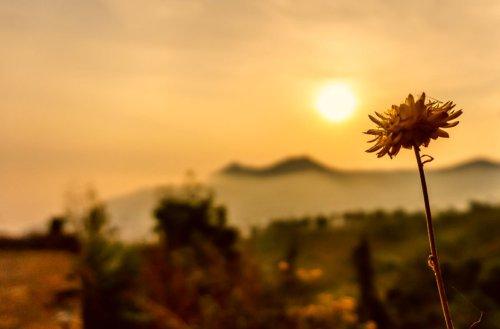Greece Records Highest Temperature in Its History in Unprecedented Heatwave