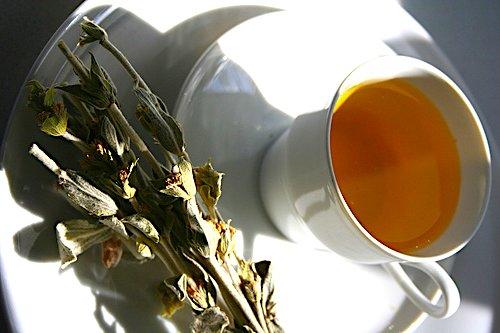 Greek Mountain Tea: Ancient Medicine and Elixir