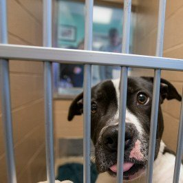 Weld County Humane Society running adoption special through weekend