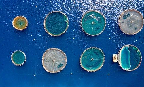 The fresh alternative to offshore fish farms   Greenbiz