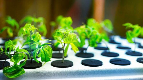 Deep Water Culture Hydroponic System for Growing Indoors