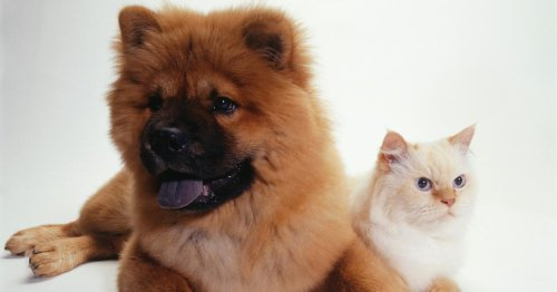 Show Your Fur Baby Love By Celebrating National Pet Day This Weekend