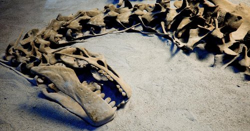Did Climate Change Cause Dinosaurs to Go Extinct?