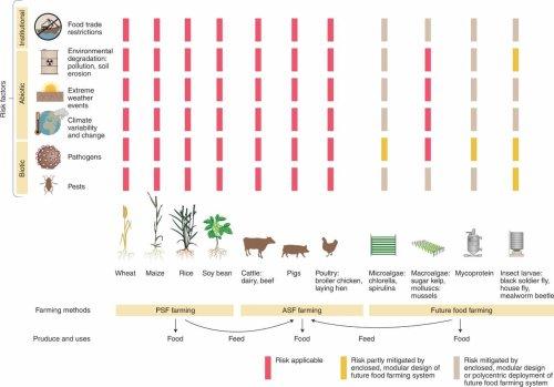 Spirulina, Clorella, larve di mosche e micoproteine, per gli scienziati i cibi chiave per sfamare il mondo nel prossimo futuro