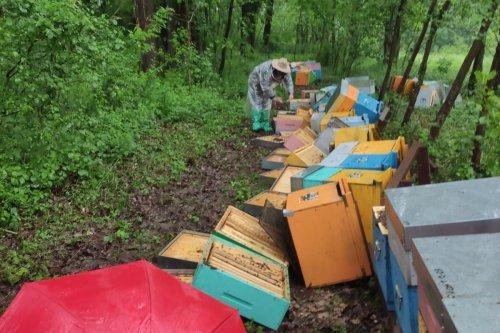 Vandali distruggono le arnie e uccidono milioni di api: oltre 60mila euro raccolti per il giovane apicoltore