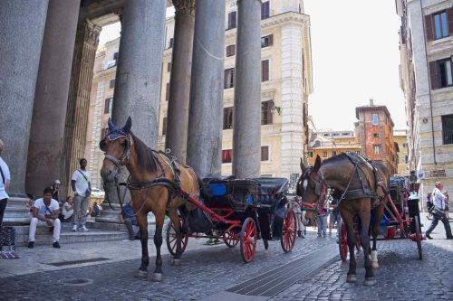 """Botticelle a Roma, """"Un'altra estate rovente per i poveri cavalli"""": il TAR sospende il nuovo Regolamento - greenMe"""