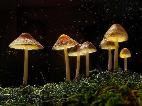 Core One Labs To Patent Biosynthesised Psilocybin For Medical Psychedelic Market