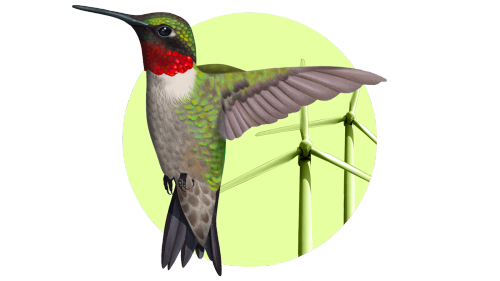 Meet the rogue birding group blocking wind energy at every turn