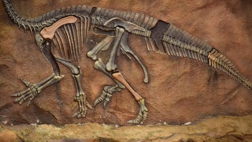 The Extinct Feathered Creature That Was Named After A Demon