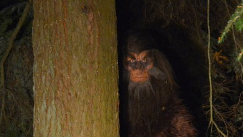 What The FBI Found When They Investigated Bigfoot