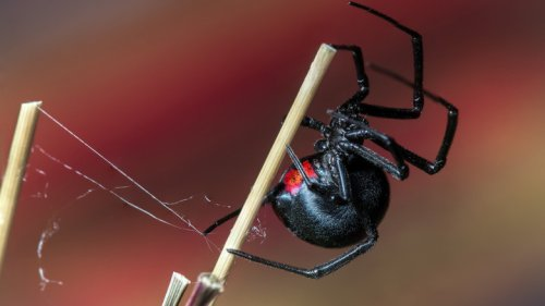 The Most Dangerous Spiders In The World