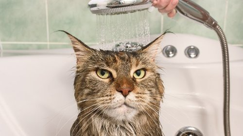 The Reason Why Most Cats Hate Water