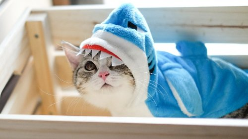 Things Everyone Gets Wrong About Cats