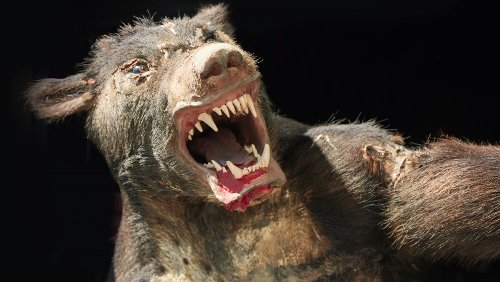 The Real Life 'Werewolf' That Terrorized France In The 1700s