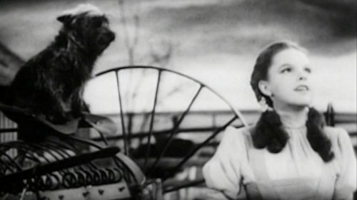 Insanely Dangerous Things That Happened On The Set Of The Wizard Of Oz