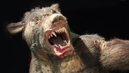 The Truth Behind Europe's Brutal Werewolf Trials