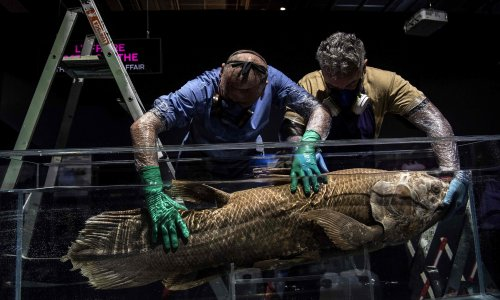 Mysterious coelacanth fish can live for 100 years – study