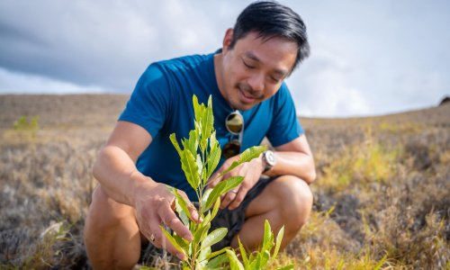 Could planting a trillion trees stop global heating? This man thinks so